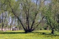 Parkbild2